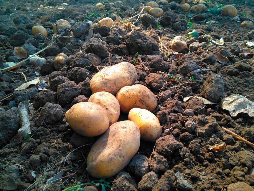 Buenos pueblos García Baquero y buenas historias: patata de Checa, patata natural de montaña para galianos y huevos rotos