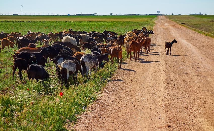 Cuidamos el confort del animal y el bienestar de  nuestros animales en las granjas García Baquero