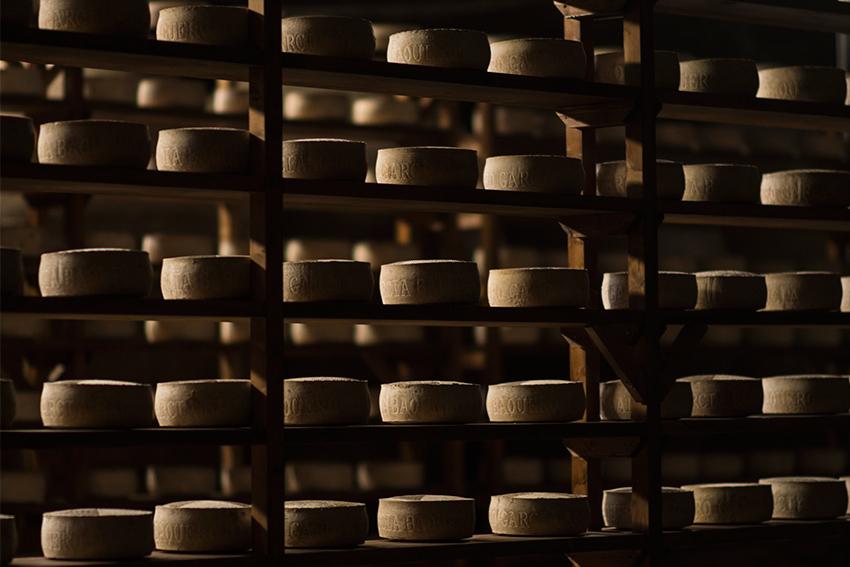 El afinado del queso, donde el Maestro Afinador controla humedad y temperatura del queso, estudiando su corteza con mimo